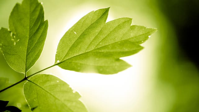 Blatt betreibt Fotosynthese