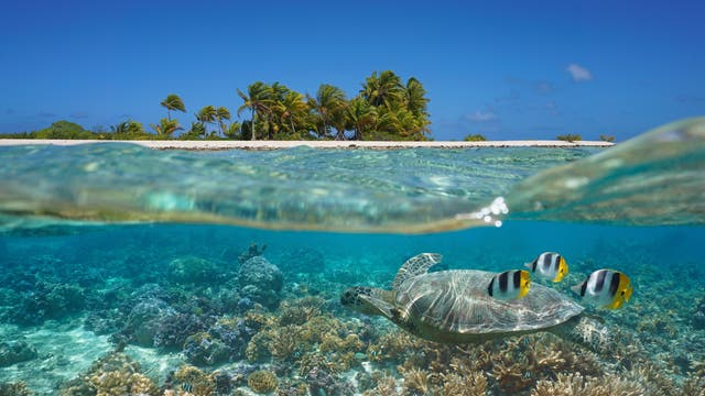 Korallenriffe wie hier in Französisch-Polynesien stellen einen mannigfaltigen Lebensraum für zahlreiche Organismen dar.