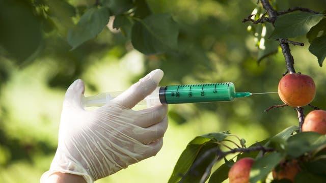 So bekommt man ganz sicher keine GMO-Pflanzen...