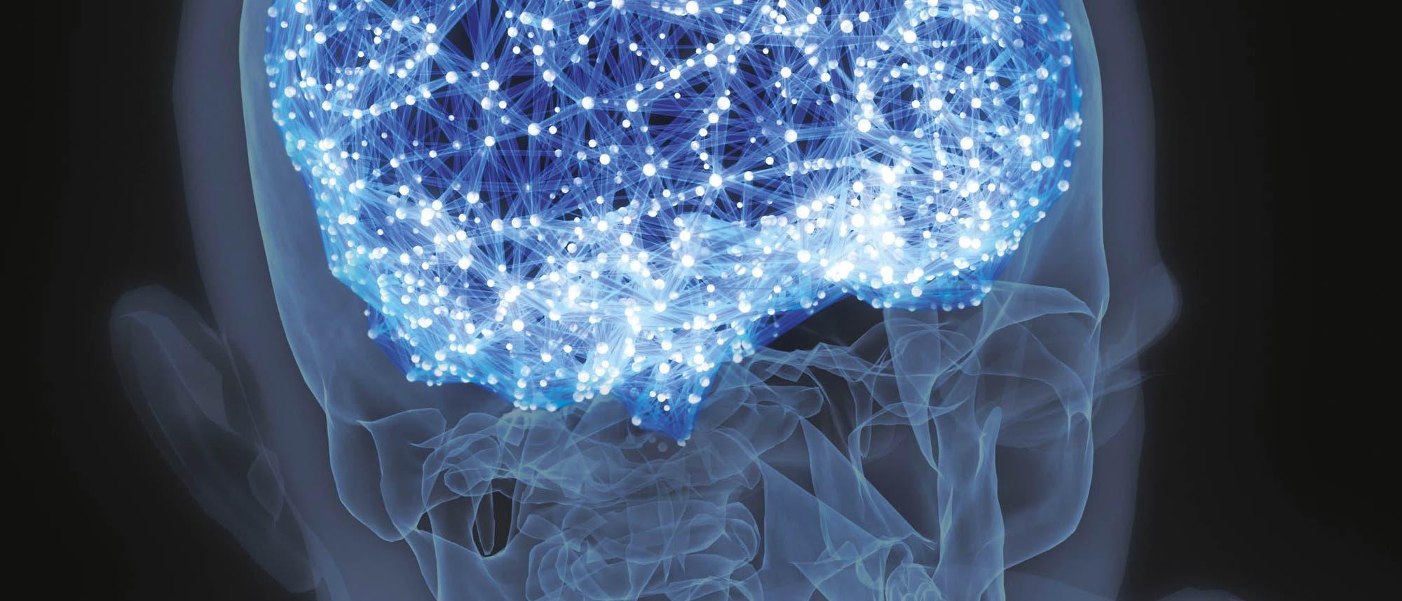Das Gehirn als Netzwerk