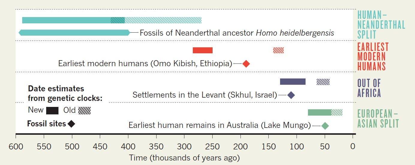 Bessere Übereinstimmung: Gen- und Fossildaten