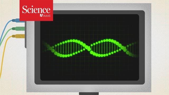 ntotes Erbgut: Wieso einige Gene nach dem Tod aktiv werden