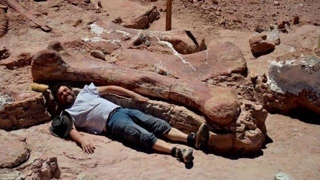 Gigantosaurier - ein noch namenloser Riese aus Patagonien