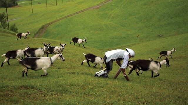 Der Ziegenmann Tom Thwaites in den Alpen