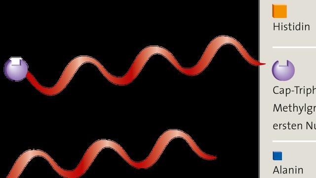 Rezeptor RIG-I