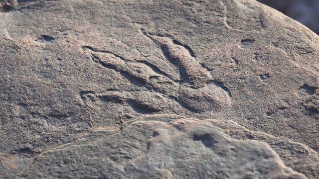 Dino-Fußabdruck