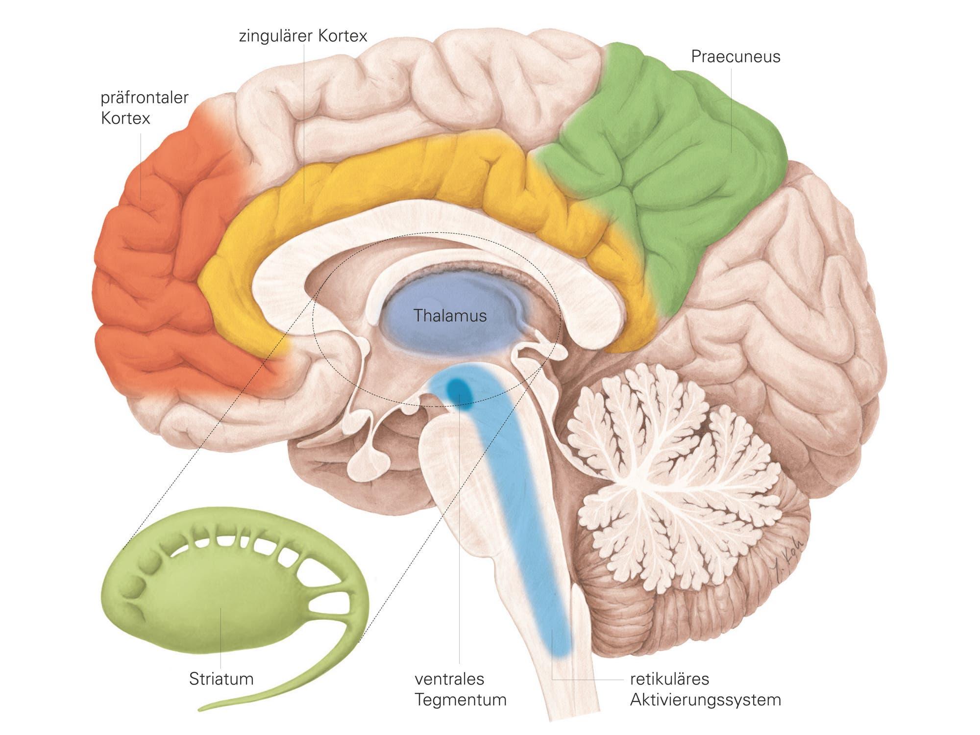Bewusstseinsforschung