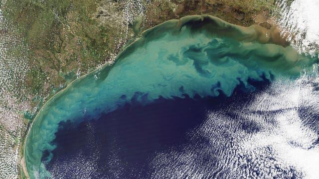 Algenblüte im Golf von Mexiko