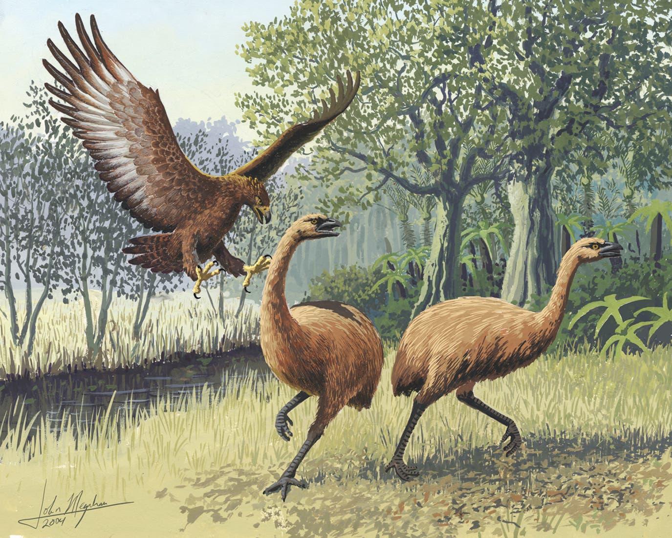 Haast-Adler auf der Jagd