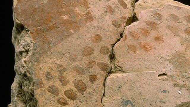 Schon vor 2600 Jahren waren Häuserwände bunt