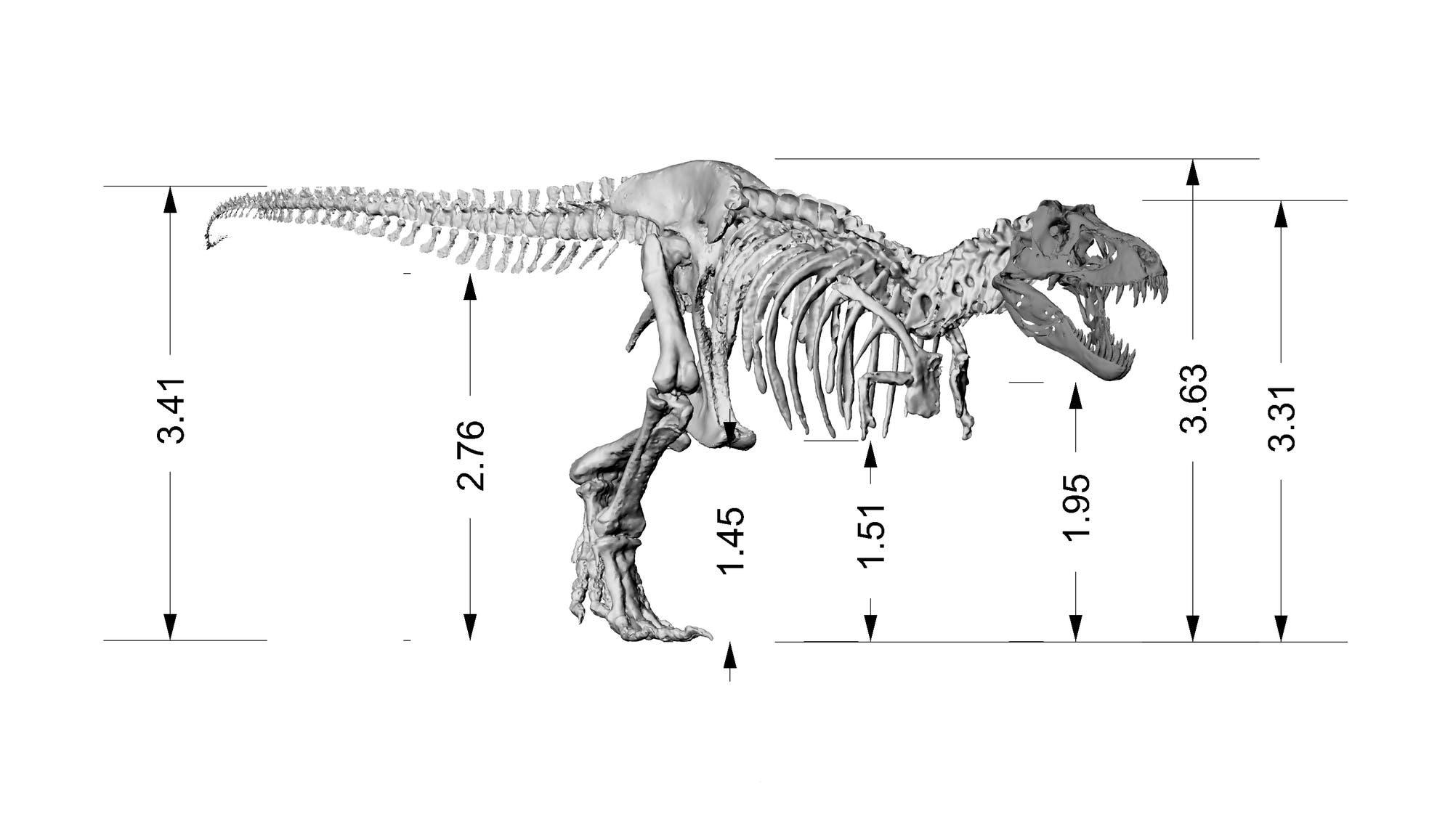 Das sind die Dimensionen von Tristan und sein aus 3D-Daten zusammengefügtes Skelett.