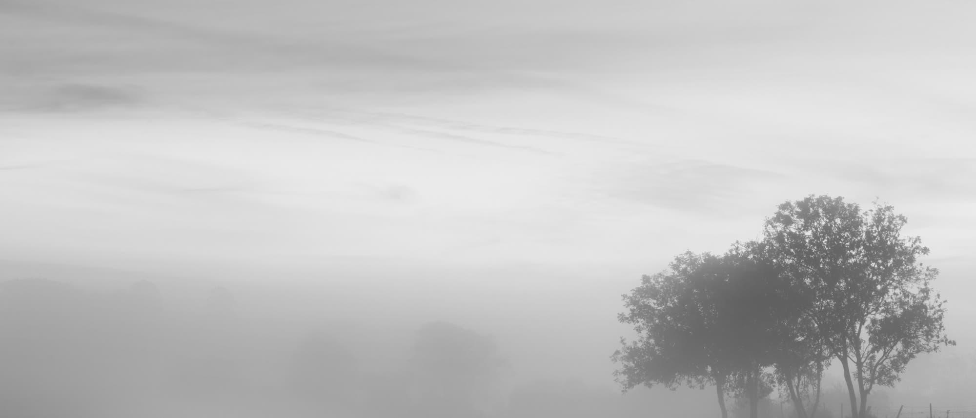 Einige Bäume stehen in dichtem Nebel; der Himmel ist verhangen.