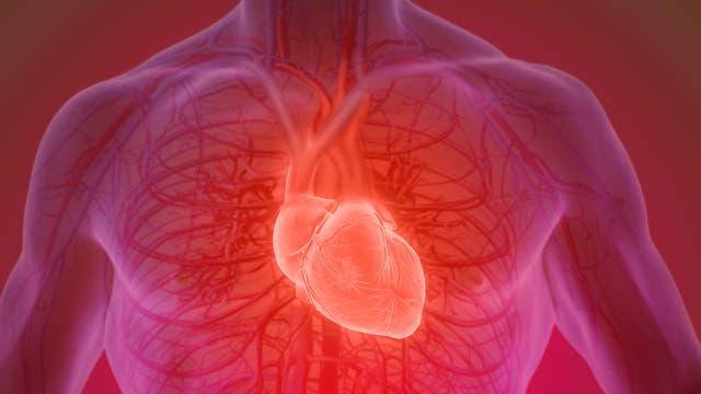 Eine grafische Darstellung des Herzens und des Kreislaufsystems.