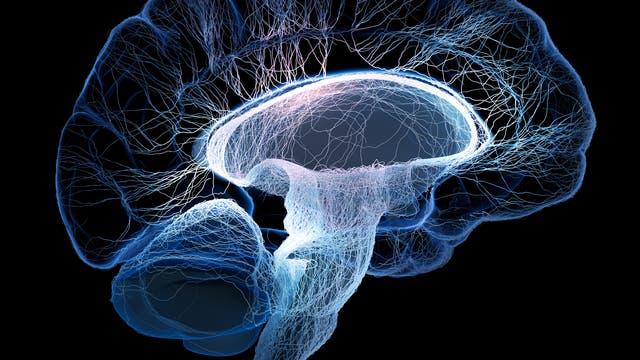 Hirn mit Nervenzellen