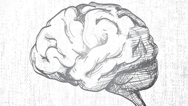 Der Blick aufs Hirn
