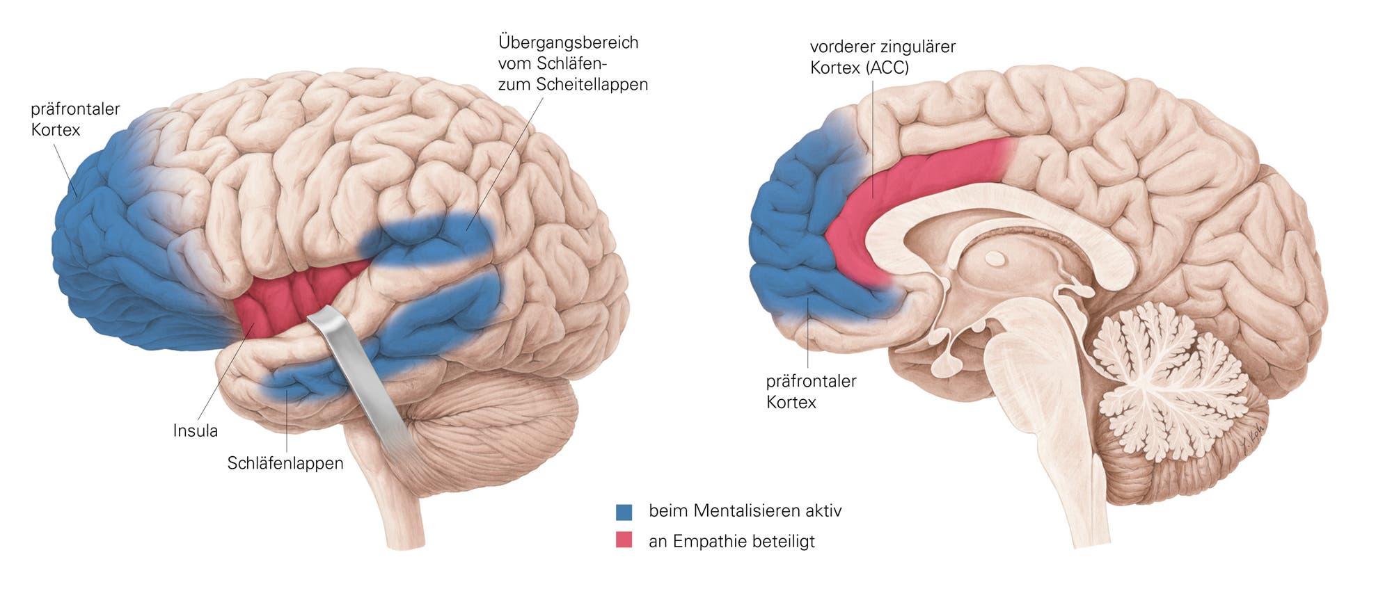 Empathie im Gehirn
