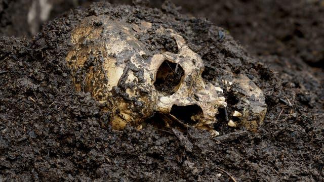 Symbolbild: Menschlicher Schädel in der Erde
