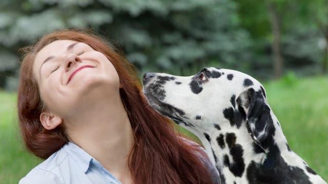Eine Frau spielt mit ihrem Dalmatiner auf einer Wiese am Waldrand.