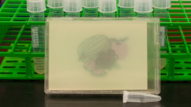 """Bild """"gemalt"""" von Escherichia coli Bakterien"""