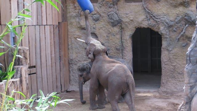 Die Elefantenbullen-WG