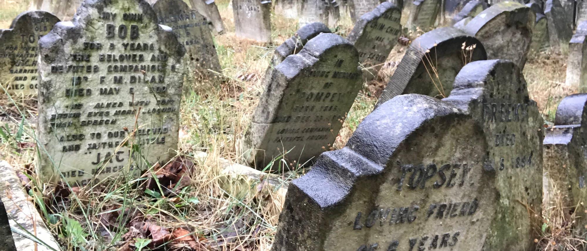 Tierfriedhof in England