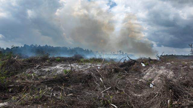 Rodungsfeuer in Indonesien (Archivbild)