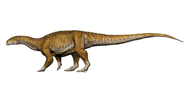 Rekonstruktion des Sauropoden-Vorläufers Ingentia prima