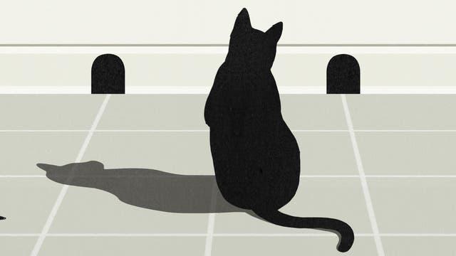 Katze vor Mauseloch quer