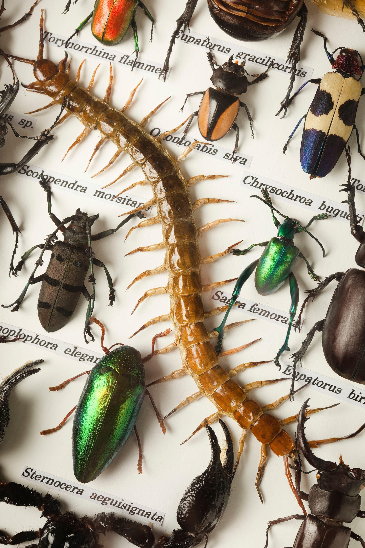 Für viele Wirbellose gehören katastrophale Bestandseinbrüche zur natürlichen Dynamik: Sammelnde Biologen können daher Arten im Normalfall nicht gefährden.