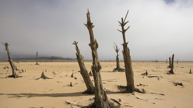 Baumstümpfe in einem leeren Reservoir