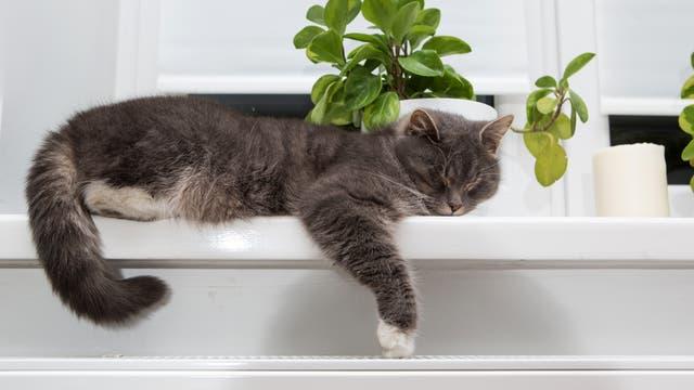 Eine Katze schläft auf dem Fensterbrett über der Heizung.