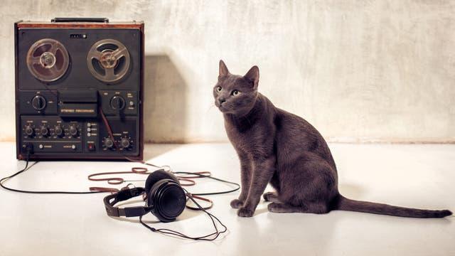 Katze vor Tonband und Kopfhörer
