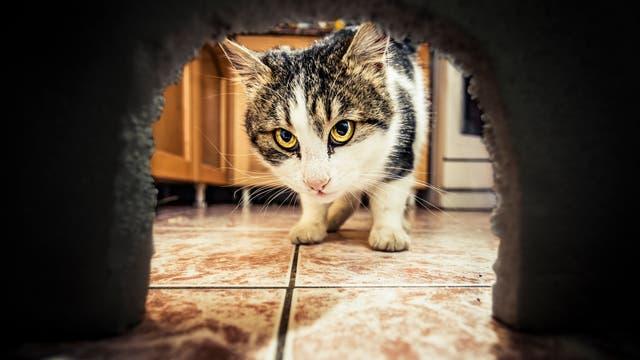 Katze vor Mauseloch
