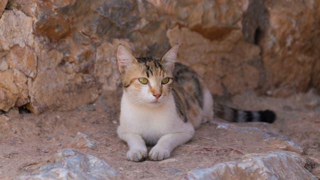 Katze sitzt im kühlen Schatten