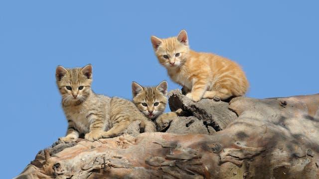 Verwilderte Hauskatzen