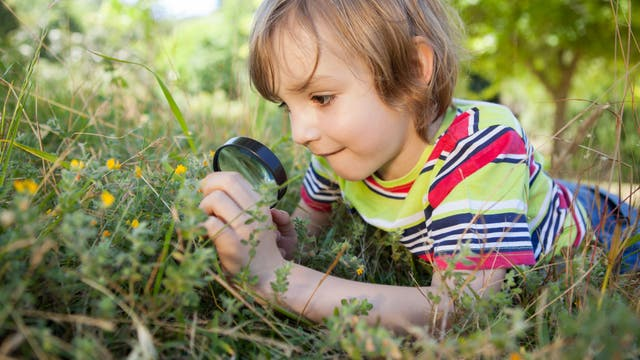 Kind mit Lupe beobachtet Insekten