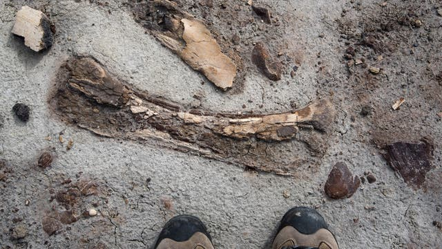 Im Park kommt man den Fossilien nahe - in manchen Fällen zu nahe