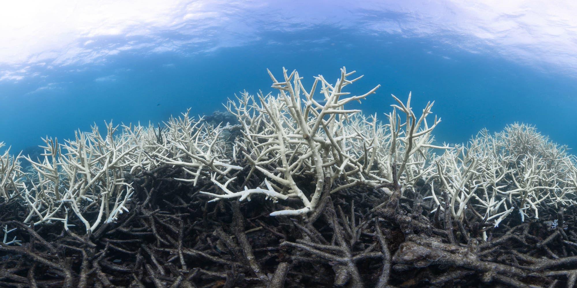 Todeszone im australischen Great Barrier Reef