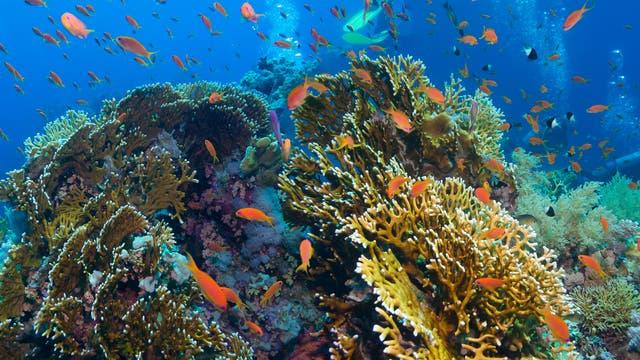 Gesundes Korallenriff (Symbolbild)