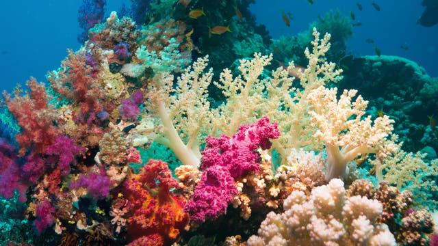 Ökosysteme wie Korallenriffe sind nicht nur voller Tier- und Pflanzenarten, sondern auch Fundgruben für Mikroben - und potenzielle Gegenmittel.