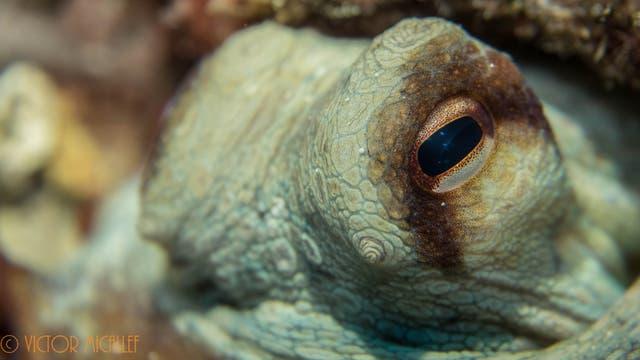 Schau dem Kraken ins Auge