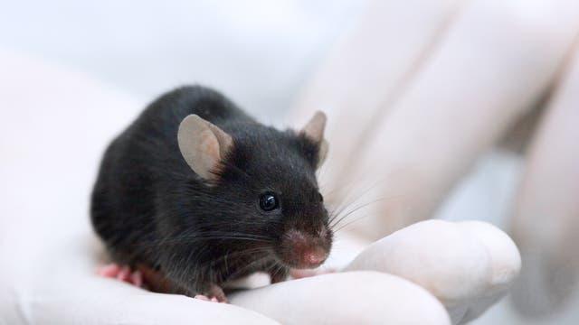 »Die Maus war immer der limitierende Schritt in der Untersuchung von Krankheitsgenen«