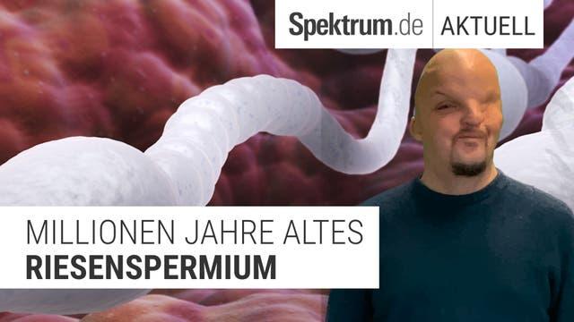 Wer hat das längste Sperma?
