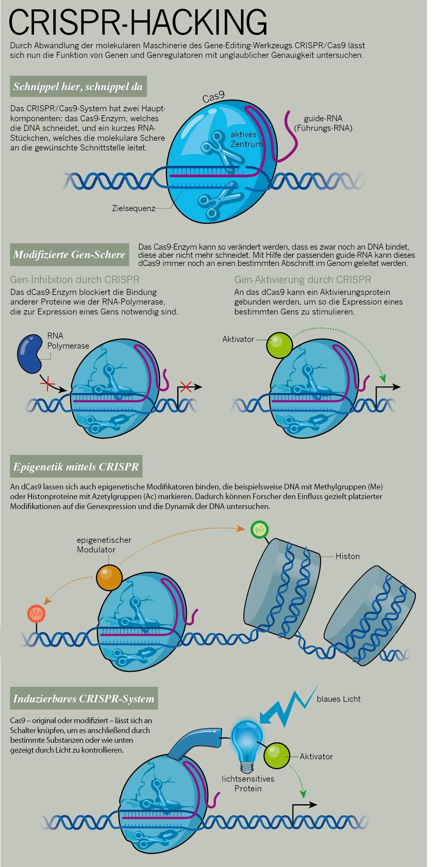 CRISPR-Hacking
