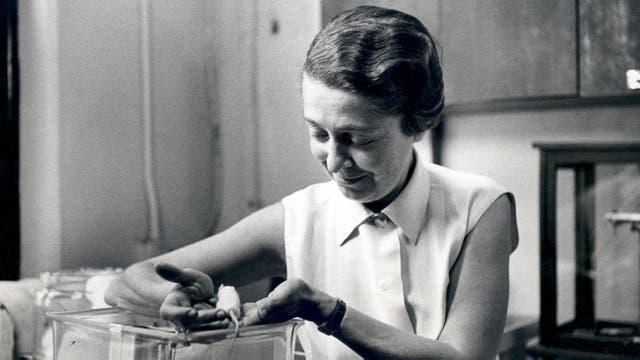 Rita Levi-Montalcini in den 1960er Jahren in ihrem Labor an der Washington University in St. Louis.  Für ihre Forschung untersuchte sie neben Hühnerembryonen auch Mäuse.