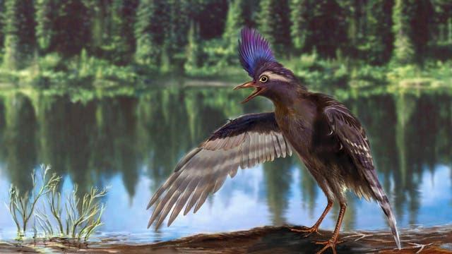 Der frühe Vogel aus der Kreidezeit
