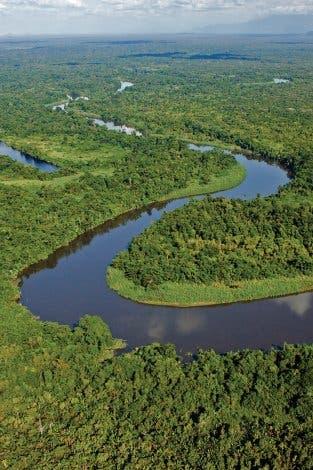 Regenwald auf Papua-Neuguinea