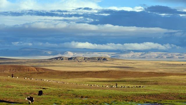 Kalt und hoch, mit weiten Horizonten - das ist Tibet heute. Doch einst wuchsen hier Palmen.