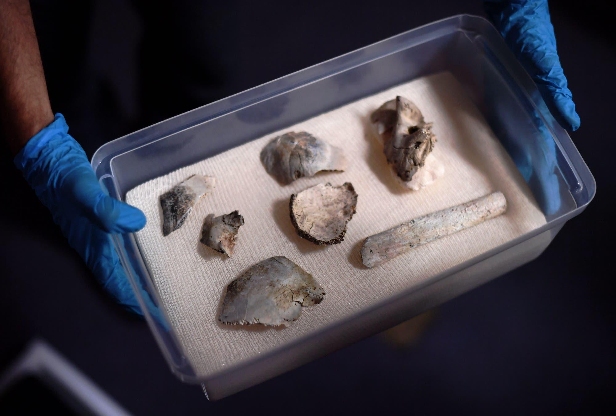 Die fossilen Überreste einer jungen Frau, die vor mehr als 11 000 Jahren in Südamerika lebte, galten nach dem Brand im Nationalmuseum von Rio de Janeiro im September 2018 zunächst als verschollen. Laut Medienberichten lagerten sie während des Brands jedoch in einem Metallschrank und haben das Feuer einigermaßen unversehrt überstanden.