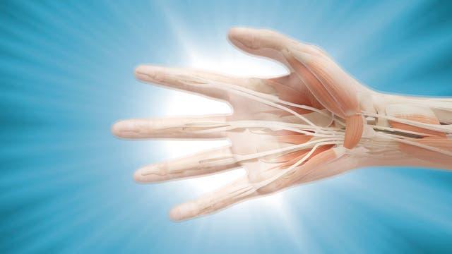 Lichtdurchlässige Hand